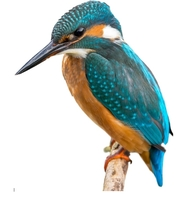 Kingfisher Auctions